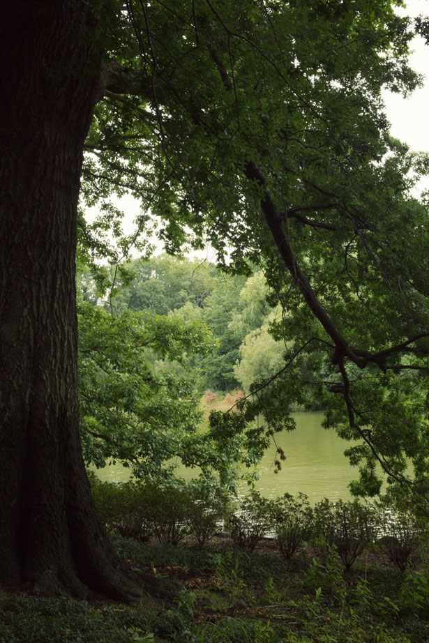 Central Park (13)