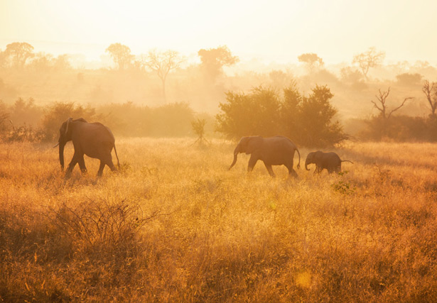 Safari (27)