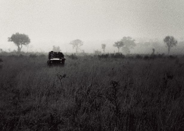safari (3)