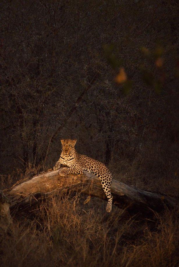 safari (2)