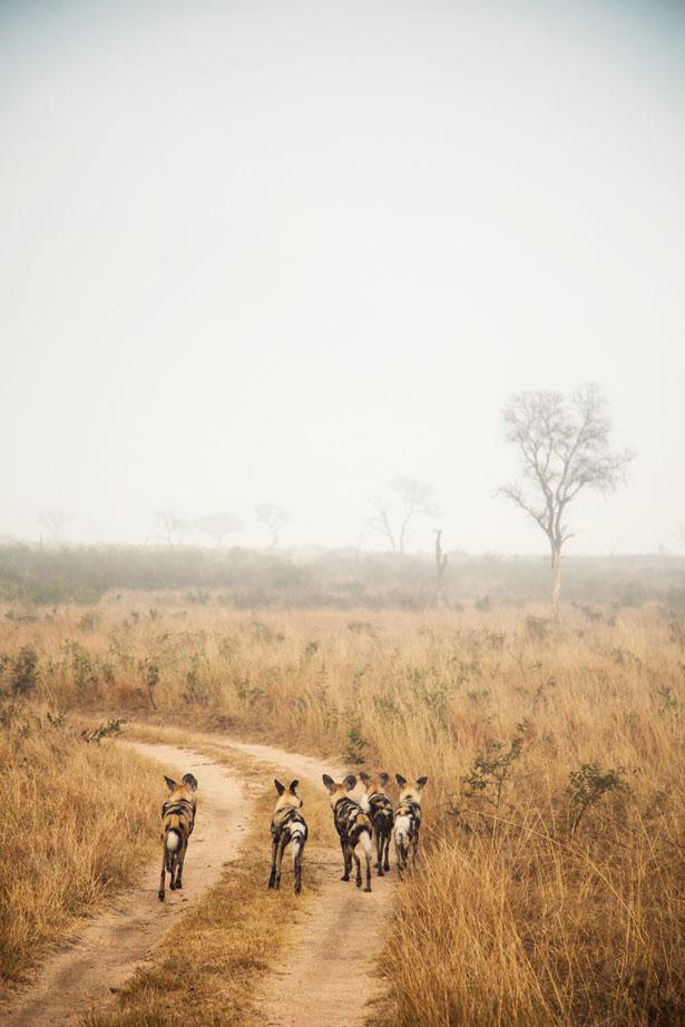 Safari (24)