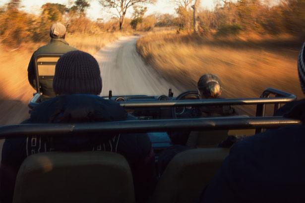 Safari (14)