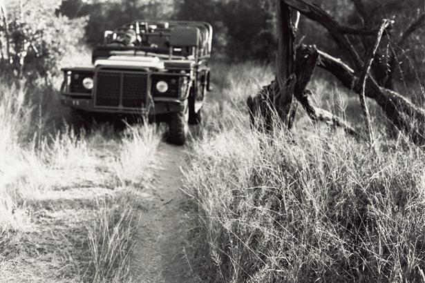 Safari (12)