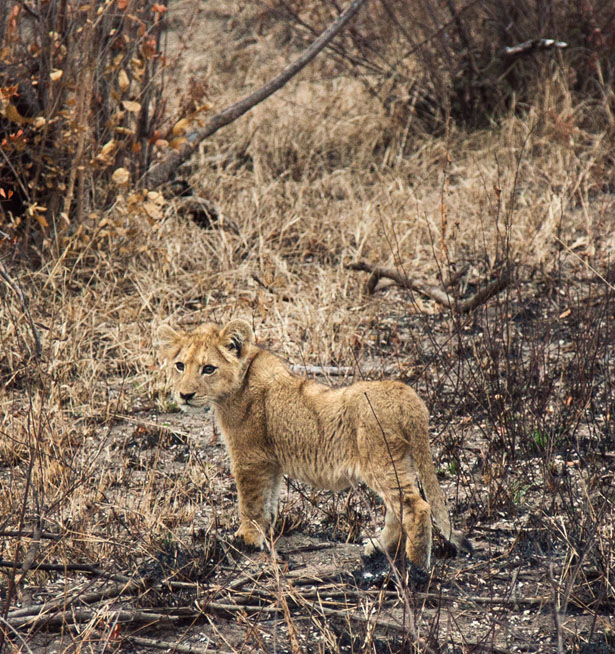 Safari (9)
