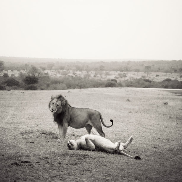 safari (15)