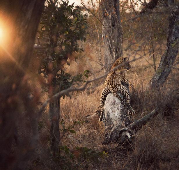 safari (17)