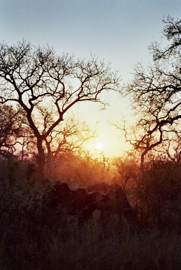 safari (20)
