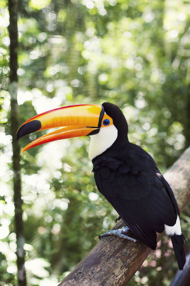 A vist to the Bird Park at Das Cataratas