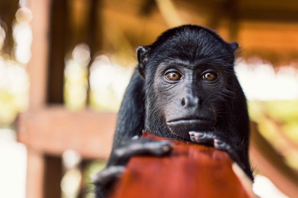 Monkey_Love_002