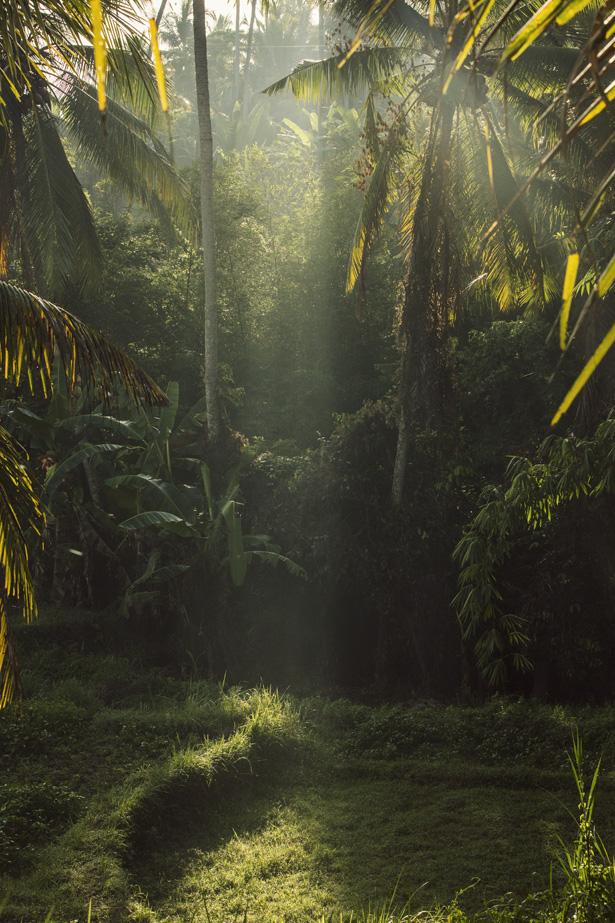 Cuyana_Bali_Nature_003