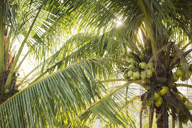 Cuyana_Bali_Nature_007