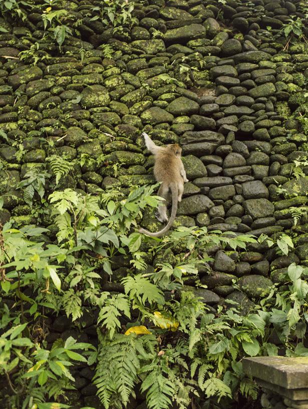 Cuyana_Bali_Nature_021