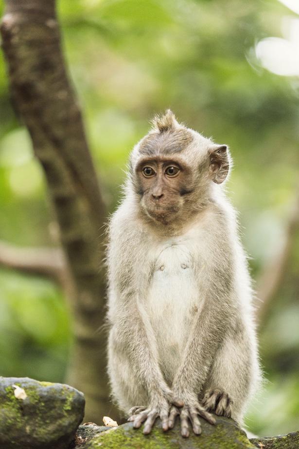 Cuyana_Bali_Nature_023