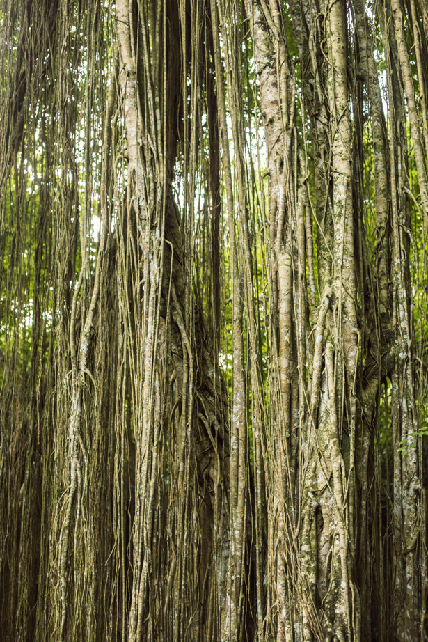 Cuyana_Bali_Nature_025