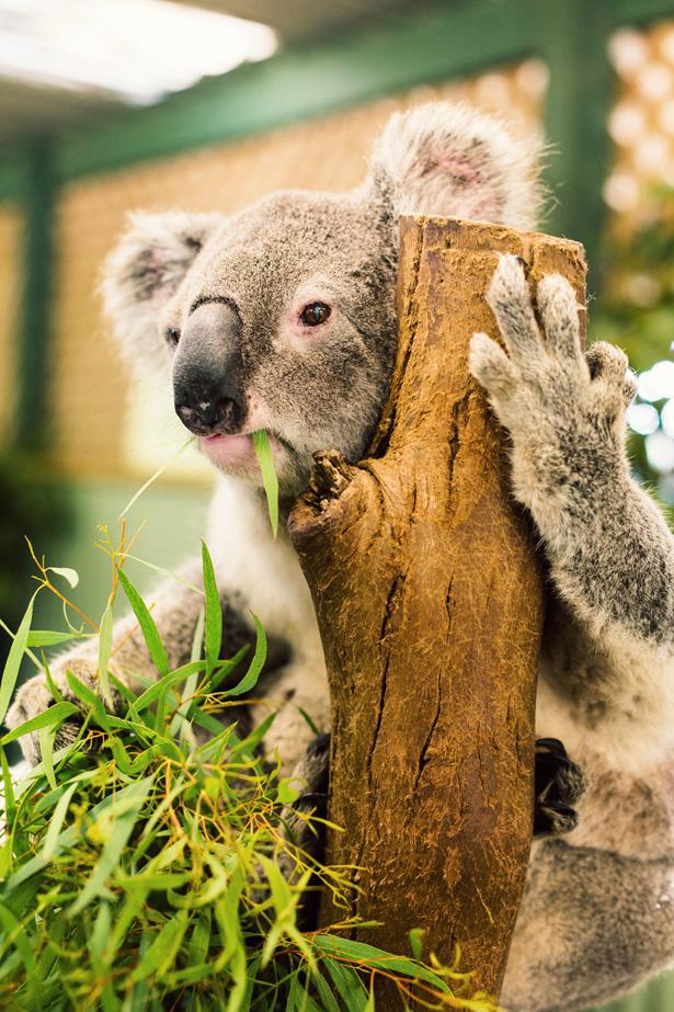 DiscoverOrigins_Australia_20