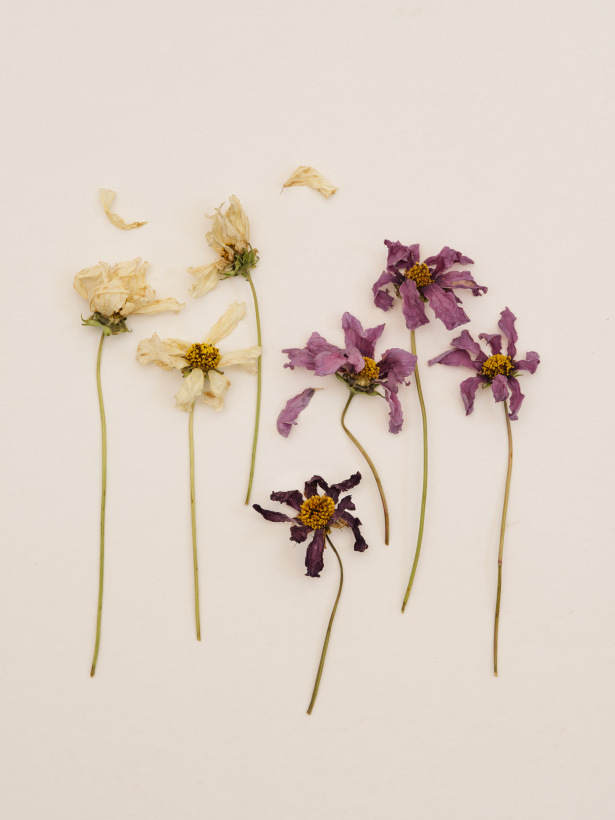 Dying_Flowers_04