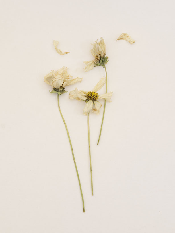 Still life of dying flowers photographed by Jamie Beck at Ann Street Studio
