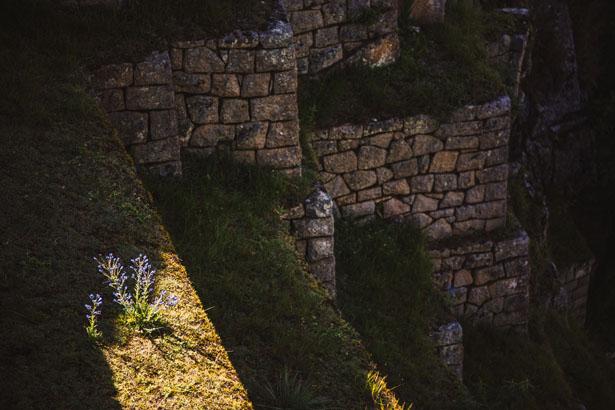 Machu_Picchu__13