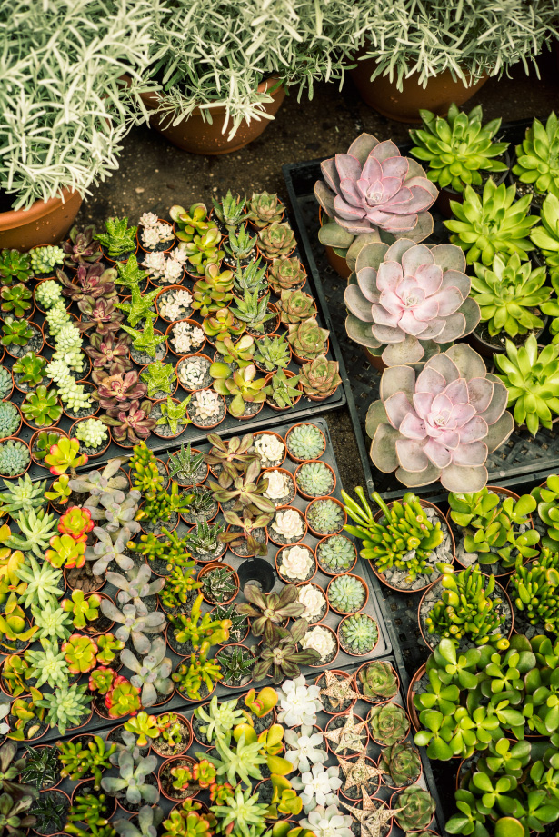 Photographer Jamie Beck visits Manhattan's flower district to purchase plants for her new Upper West Side terrace...
