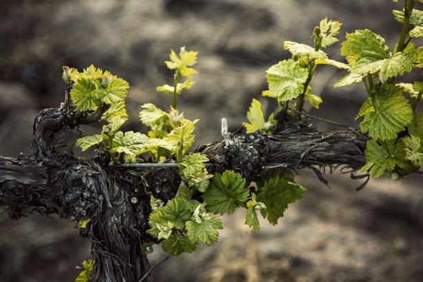 Algodon_Wine_Estate_03