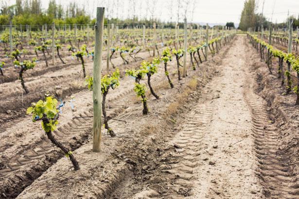 Algodon_Wine_Estate_05