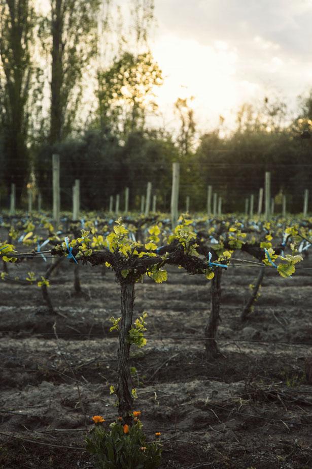 Algodon_Wine_Estate_16