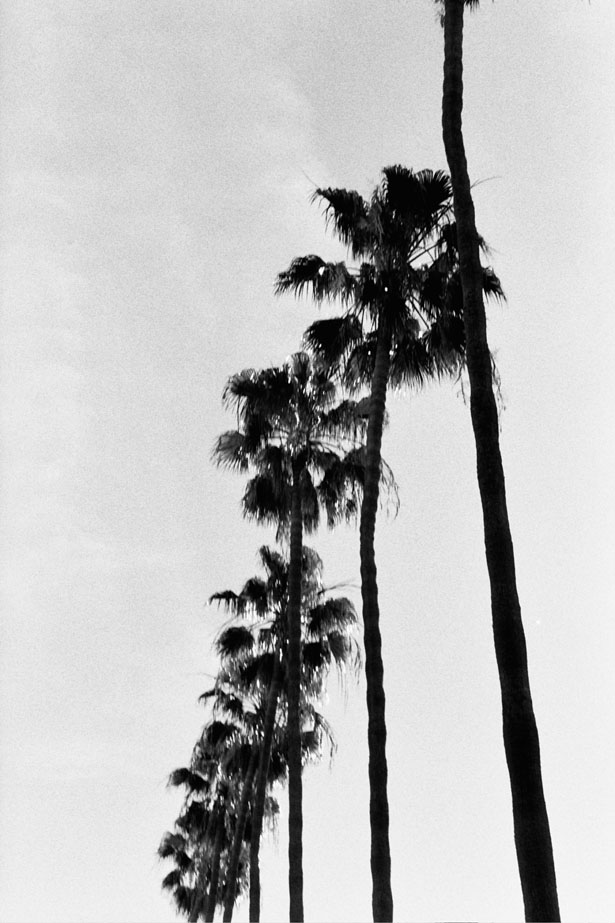 Los_Angeles_2016_36