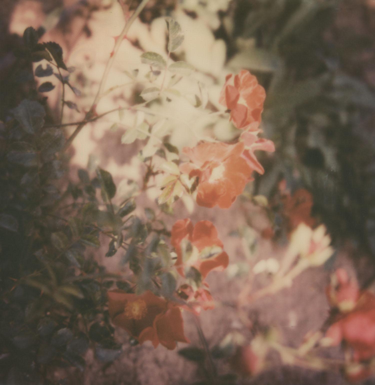 Musee_Renoir_13
