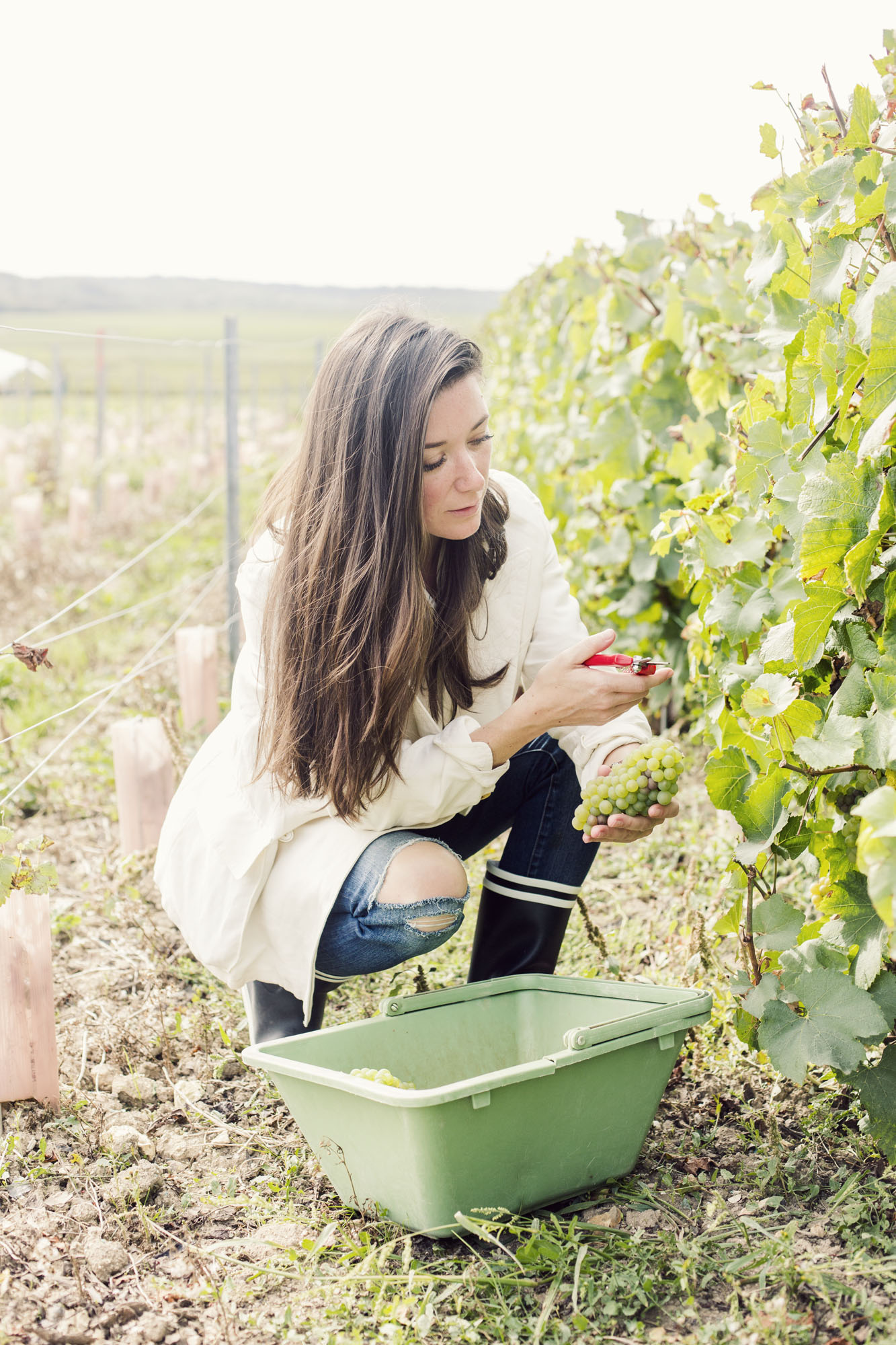ruinart_champagne_harvest_005