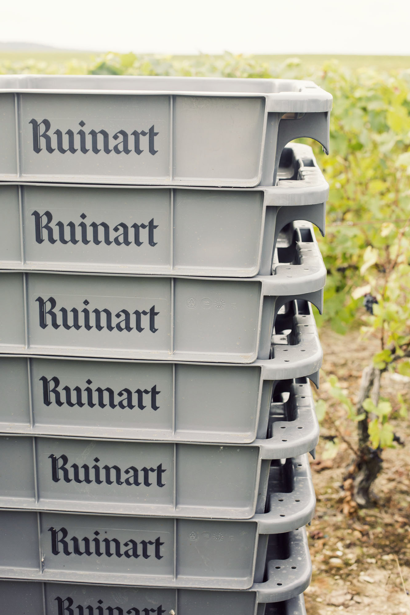 ruinart_champagne_harvest_008